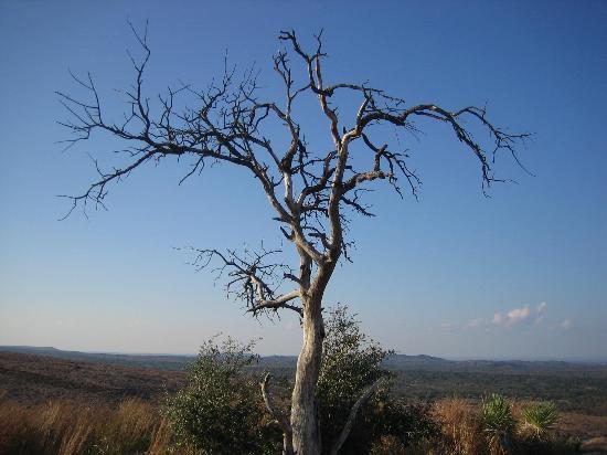 copac pribeag