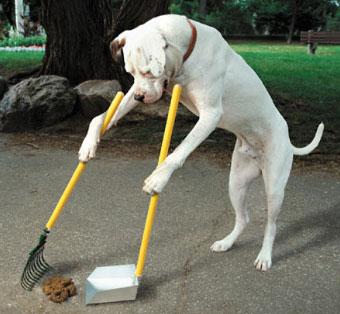 good_dog